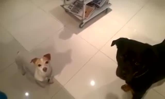 Vidéo Megan Fox