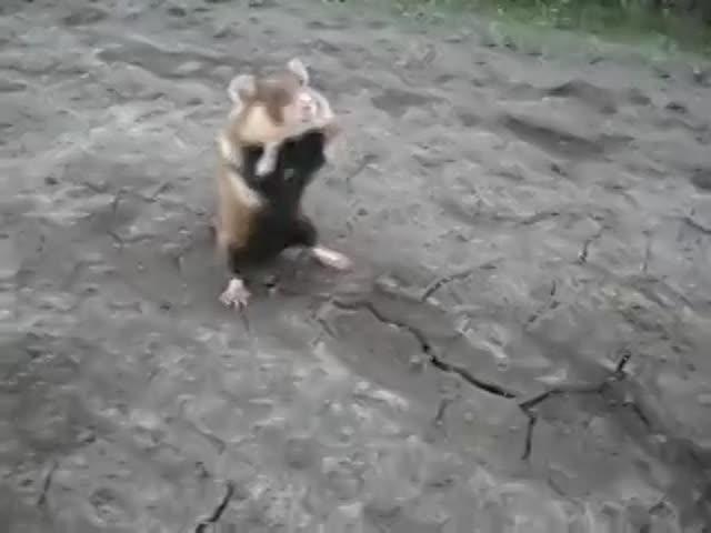 Vidéo Bilby